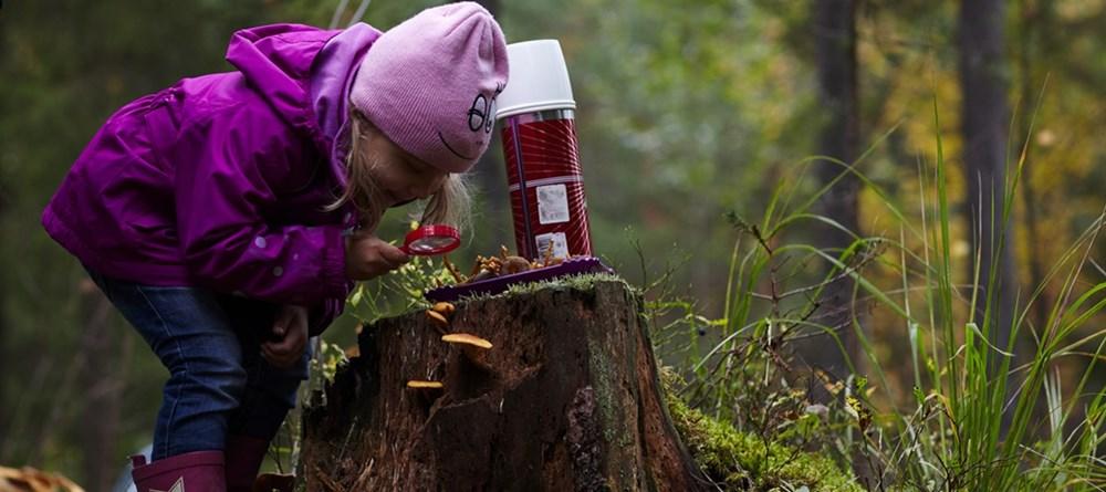 ягоды и грибы в финляндии