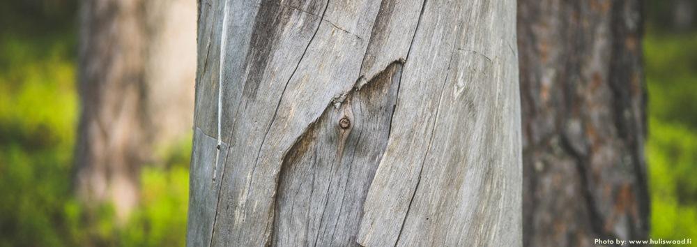 дерево kelo лапландия
