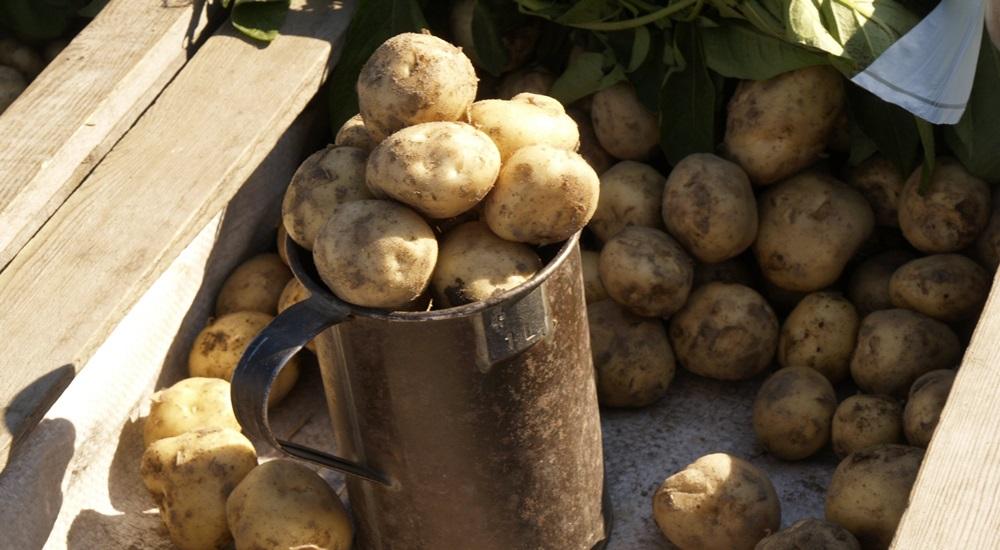 картошка финляндия